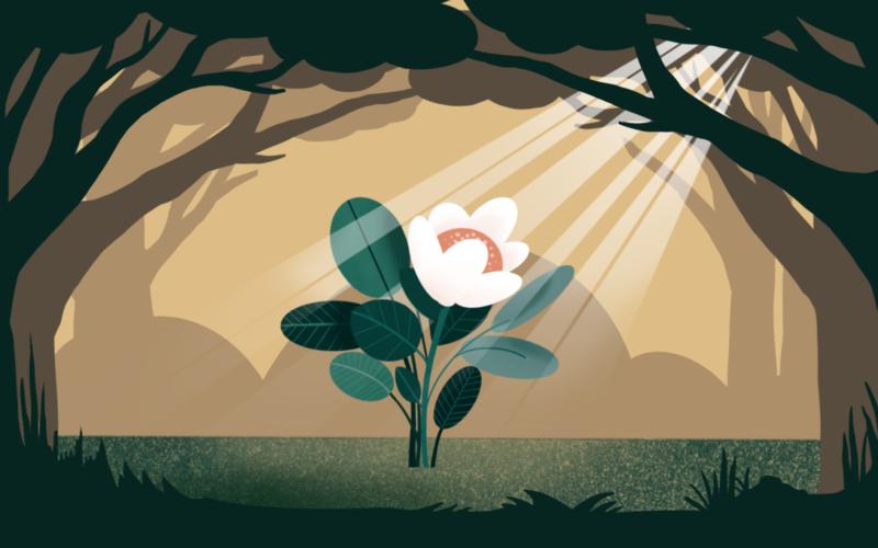 ծառեր, ծաղիկ, արևի լույս