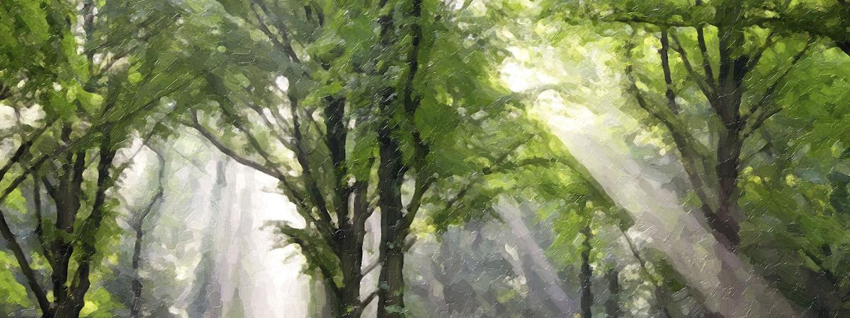 անտառ