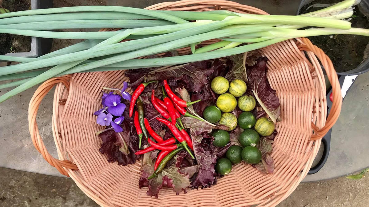 Some vegetables harvested from a home garden.