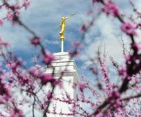 Об изменениях в храмовом облечении