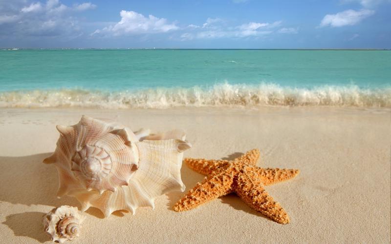 Praia com conchas e estrelas do mar.