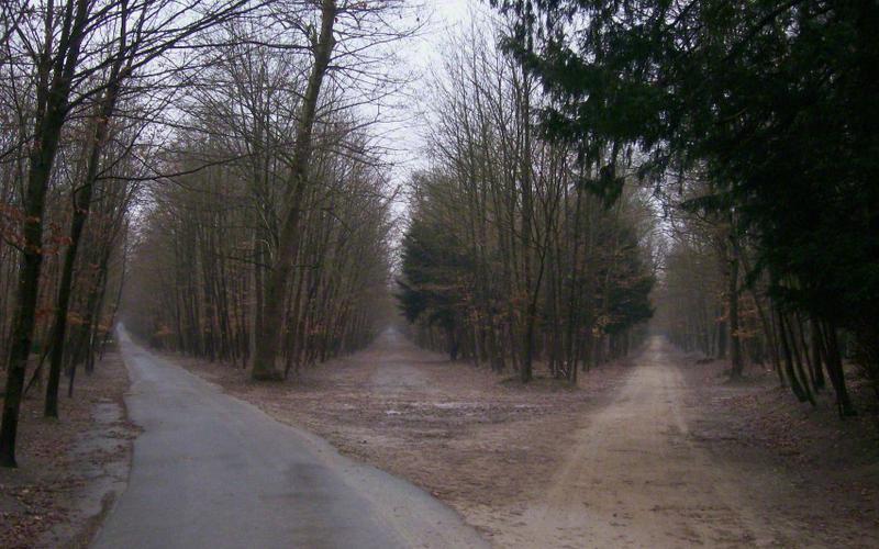Estrada na floresta que se divide em duas direções.