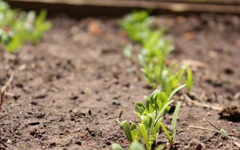Semillas y plántulas creciendo.