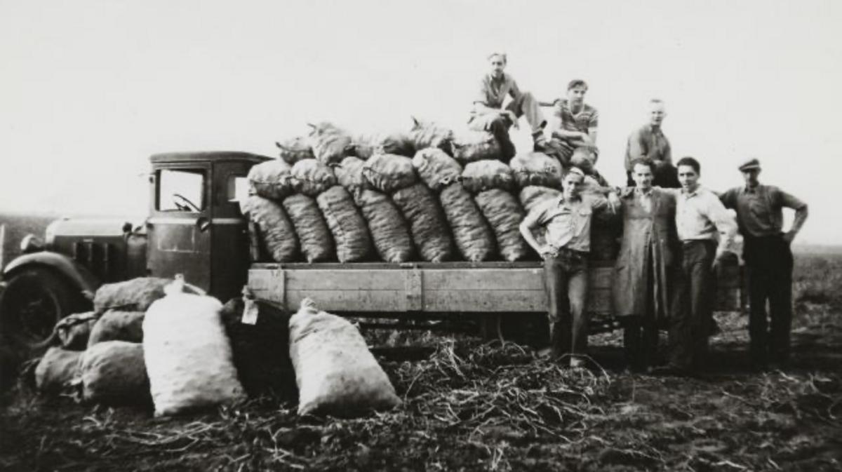 Aardappeloogst Nederland 1947