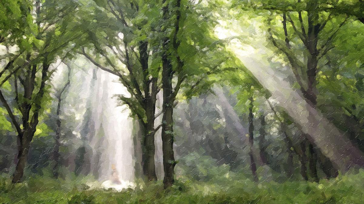 Luz no Bosque