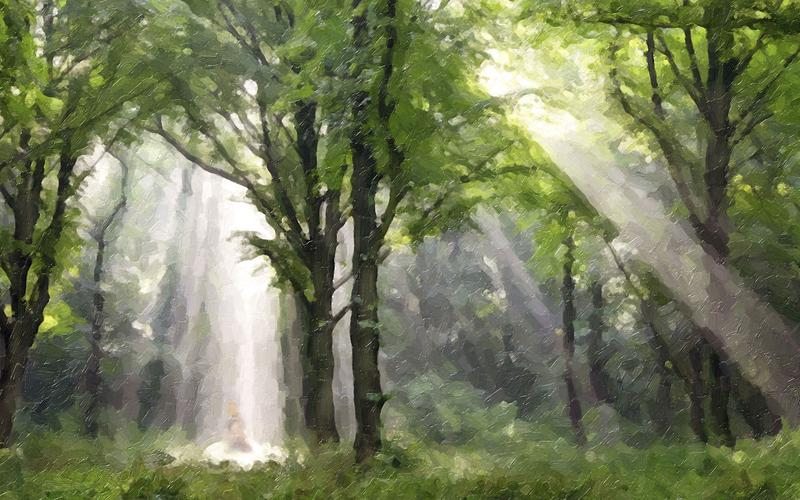 light rays in a forest