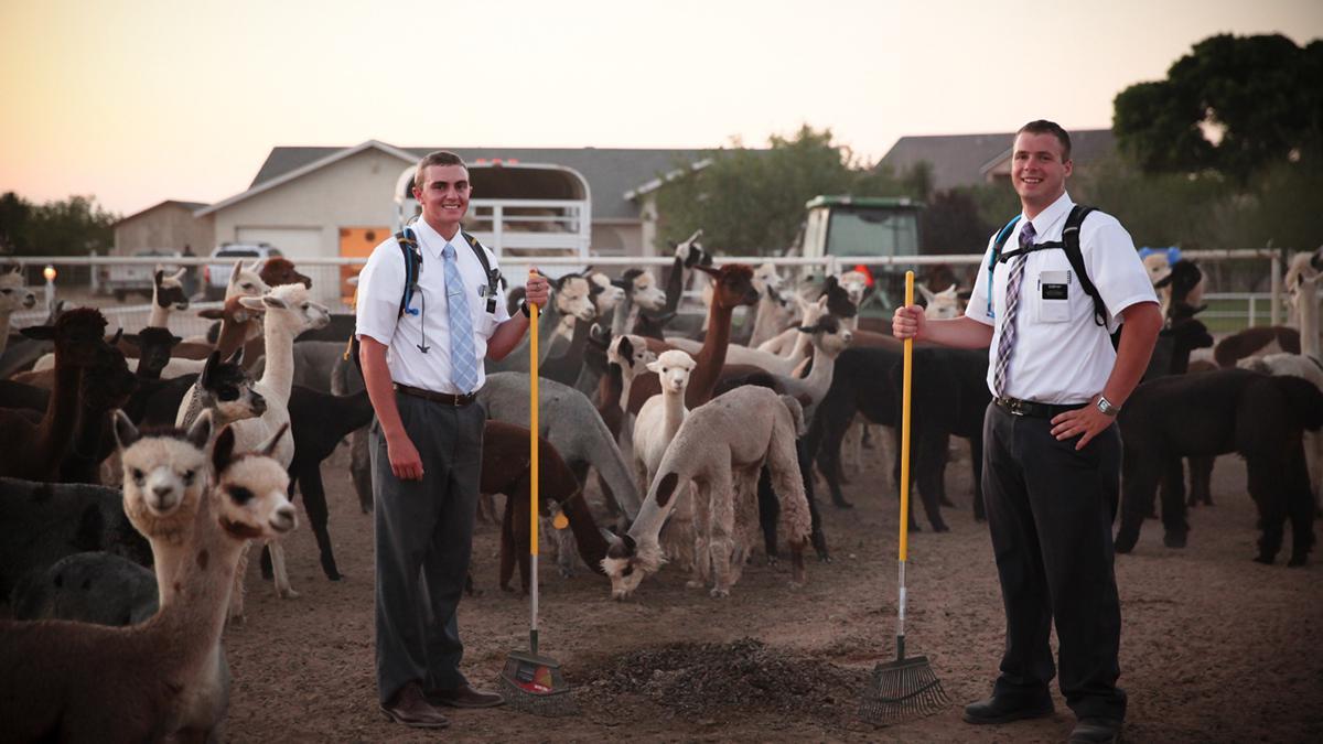 Wereldwijd zijn meer dan zeventigduizend mormoonse zendelingen werkzaam.