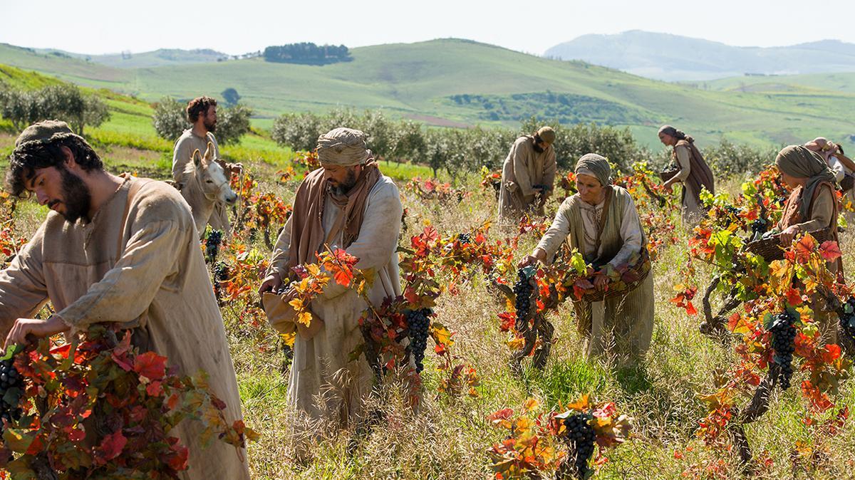 Arbeiter im Weingarten