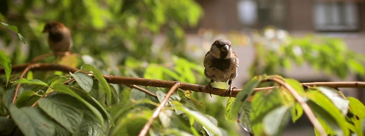 Een vogeltje in een boom