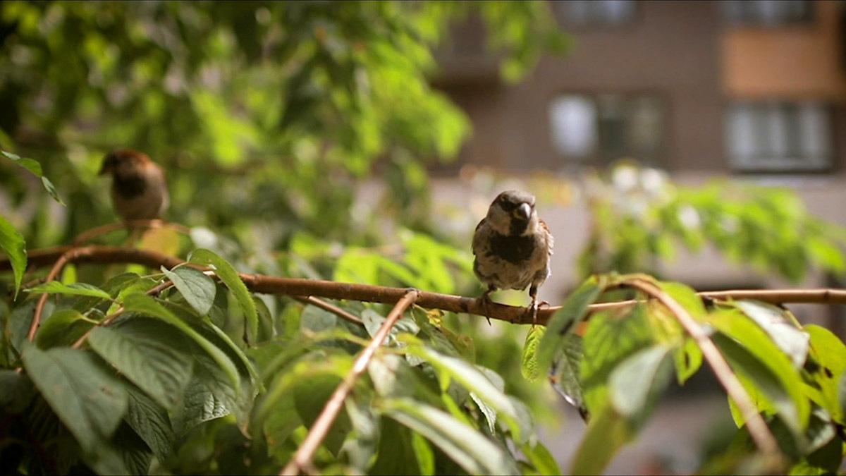 Pasăre mică într-un copac