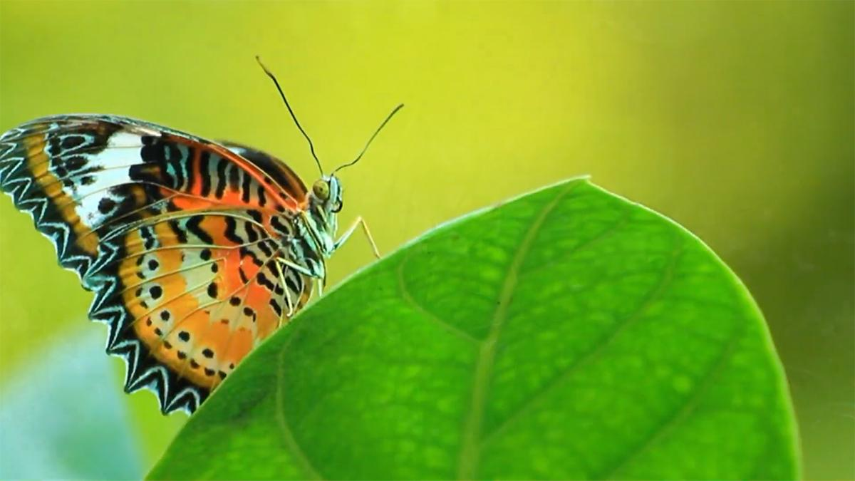 uma borboleta pousa sobre uma folha verde