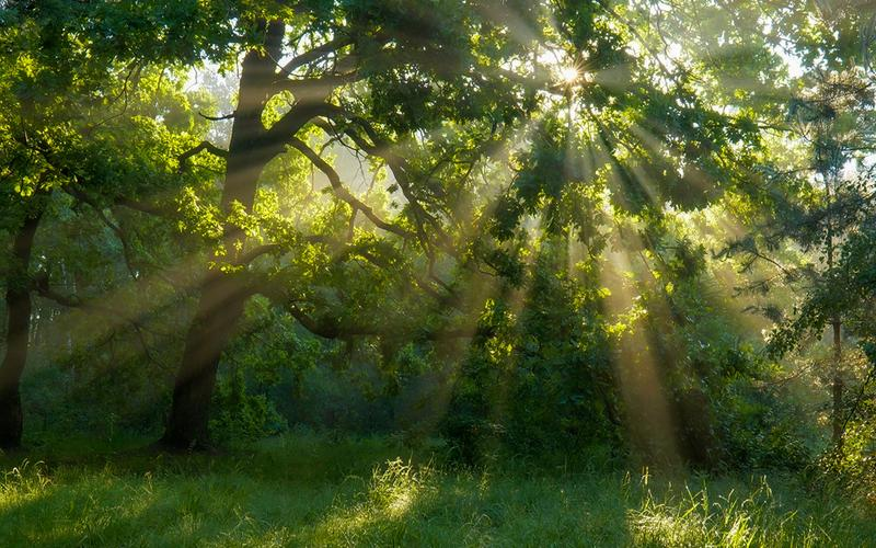Сунце сија кроз лишће у шумарку.