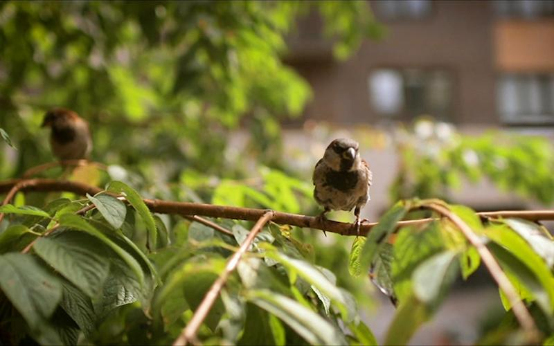 A small bird sitting in a tree