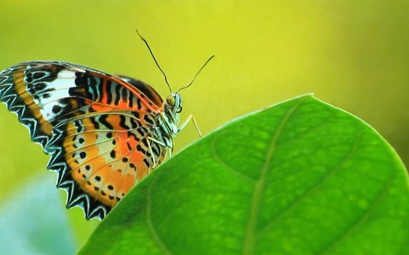 fluture stând pe o frunză verde