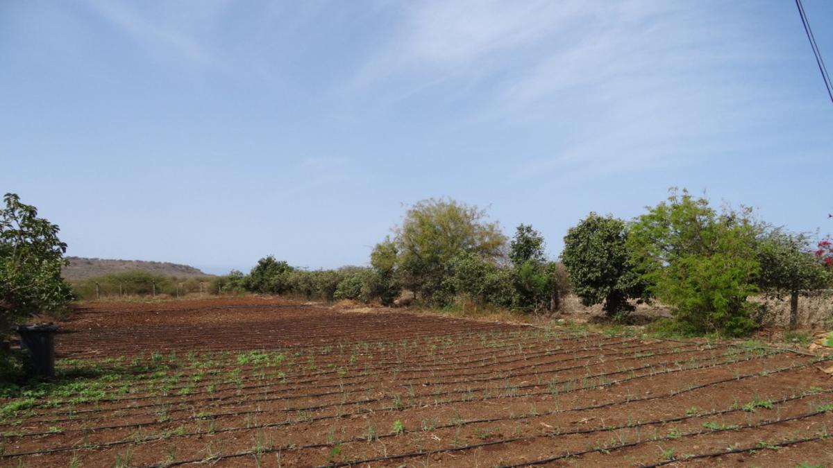 Igreja financia sistema de irrigação gota-a-gota para Hospital da Trindade