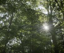 heilige bos