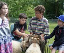 Fred und Jimmy, die Zwergschafe, besuchen die Kinder
