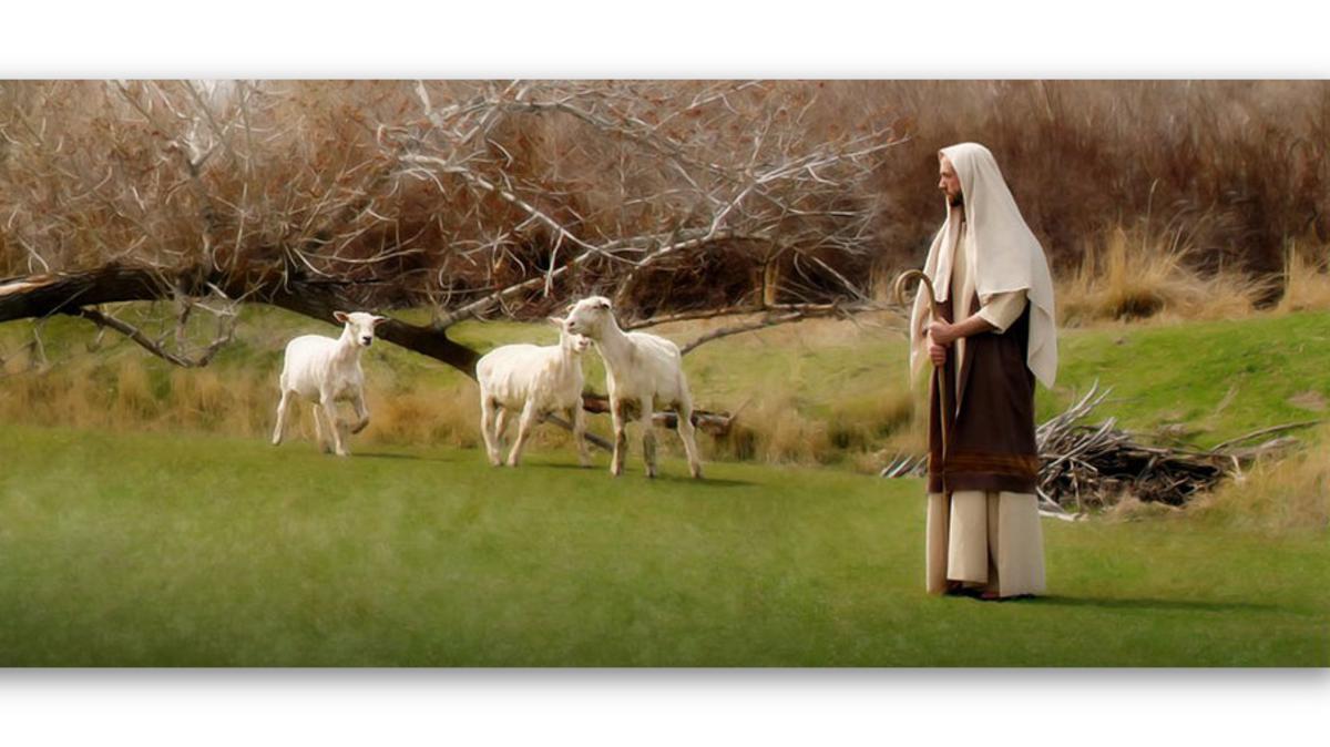 Jesus weidet Schafe