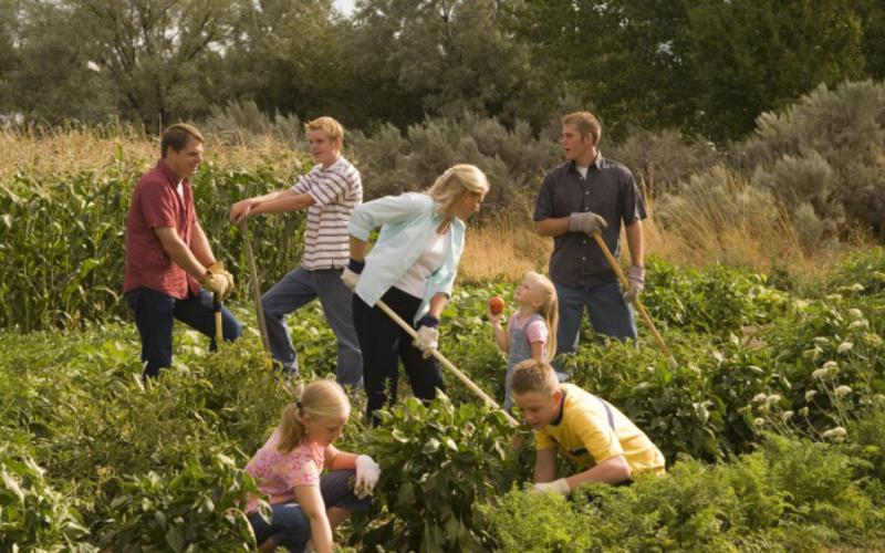 Família trabalhando a terra para produzir comida.