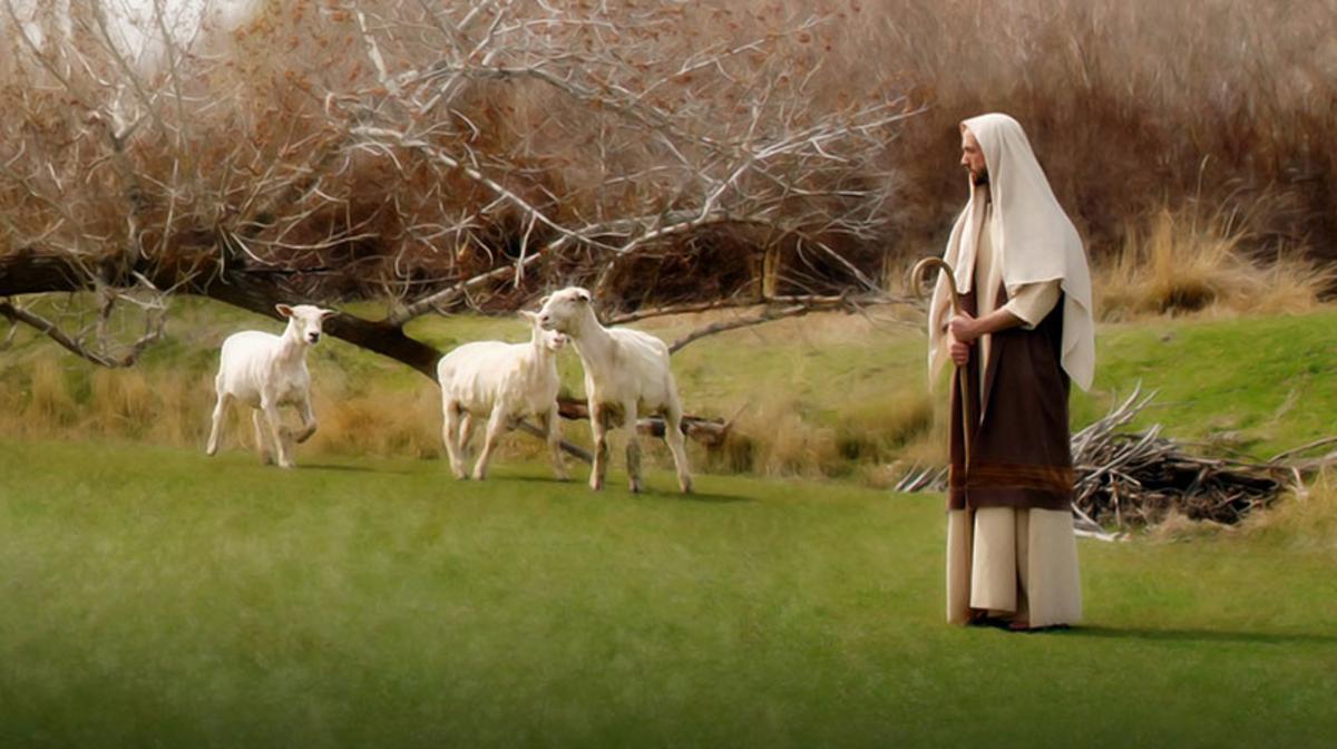 pastor y rebaño